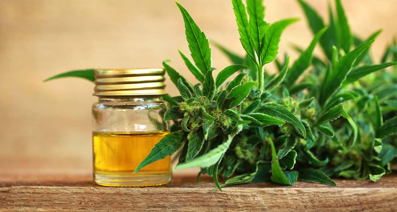 discover cbd oil